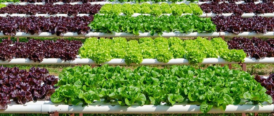 Piante da orto for Vendita piante orto